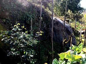 Cova Agustín